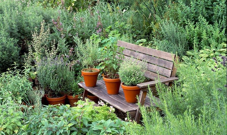 Пряные и лечебные травы