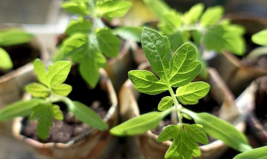 Как вырастить семена