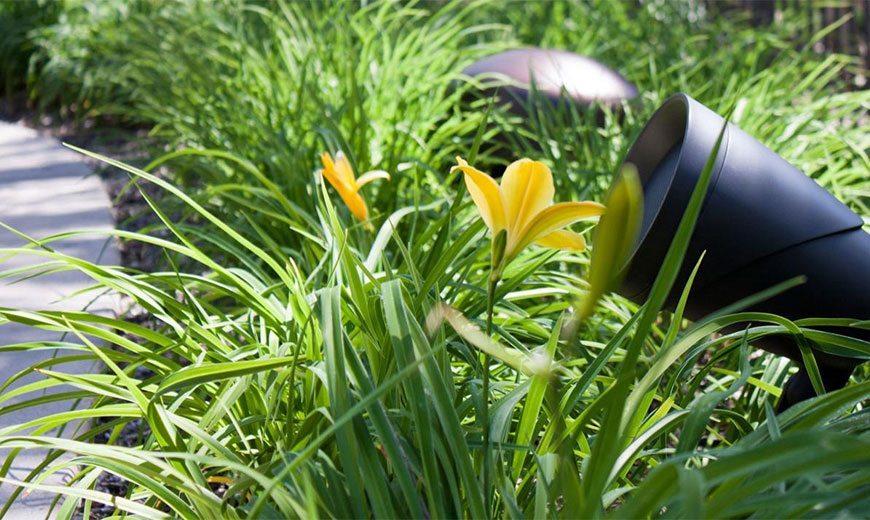Ландшафтный звук в саду