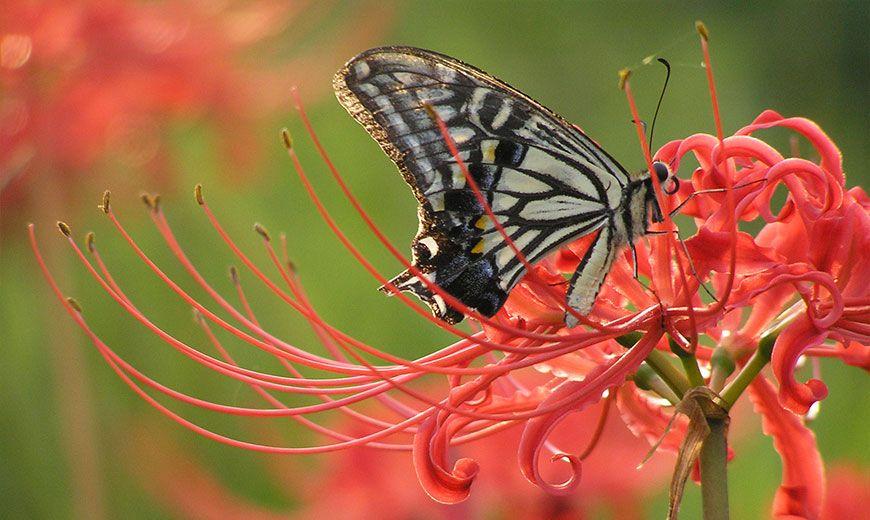 Экзотическая лилия с бабочкой
