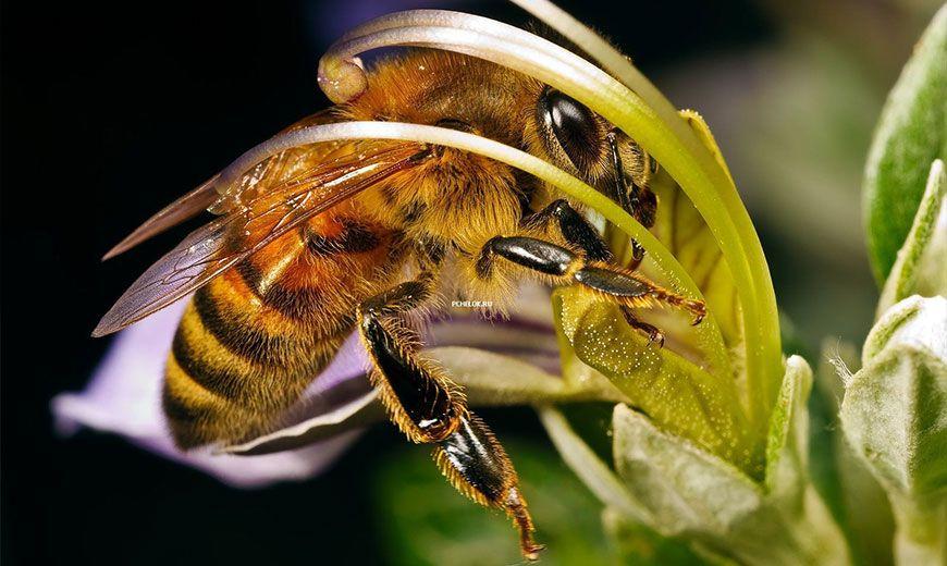 Пчелка-труженница