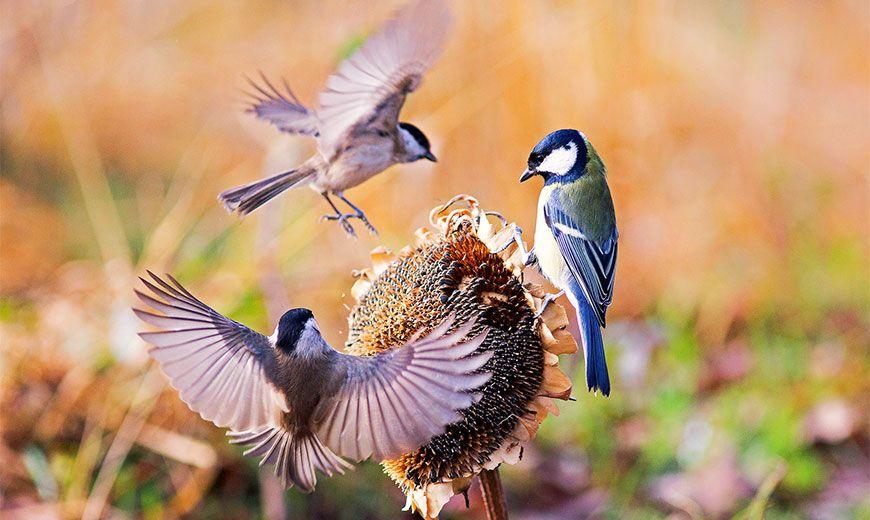 Полезные птицы в саду