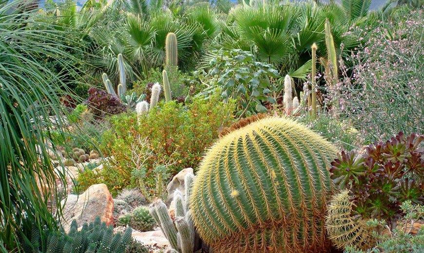Пустынный сад