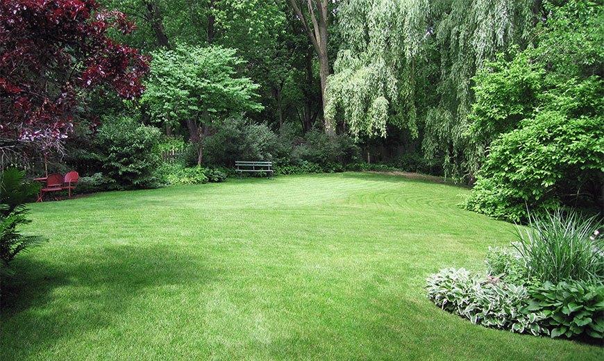 Зеленая лужайка