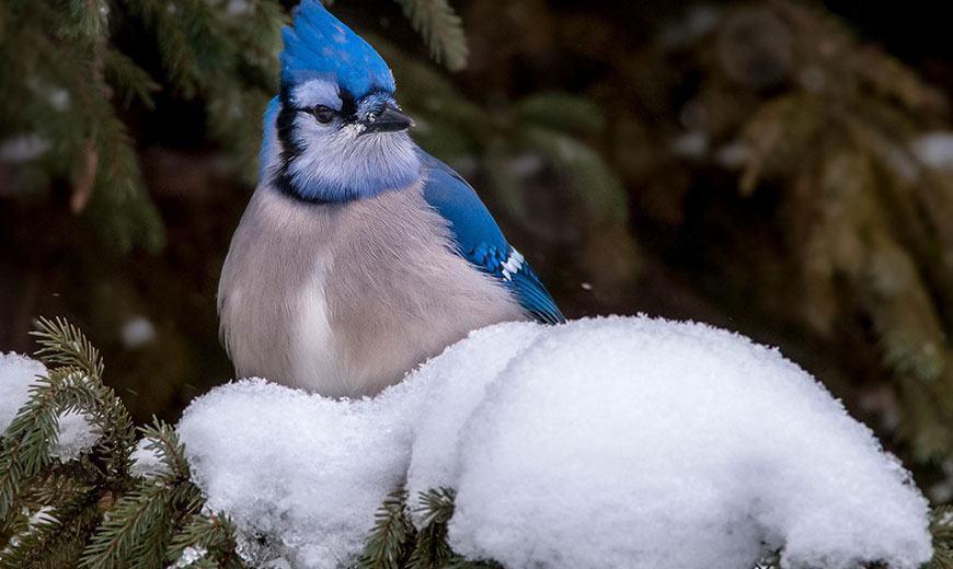 Птица на елке