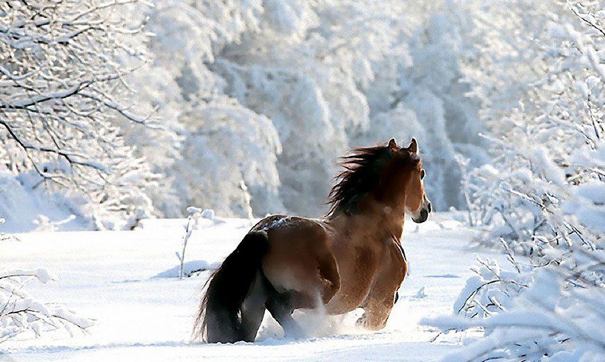 Лошадь в хвойном лесу