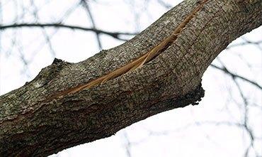 Работы в саду и лечение поврежденных ветвей в марте