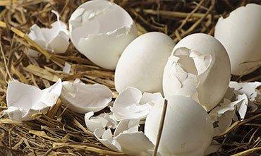 Удобрение яичной скорлупой