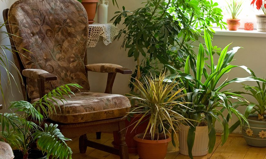 Удобрения для ухоженных растений
