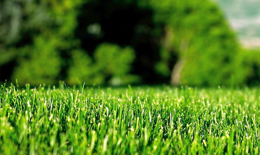 Многолетние кустарники для сада и дачи