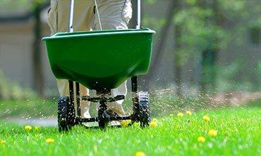 Подкормка газона сухими удобрениями