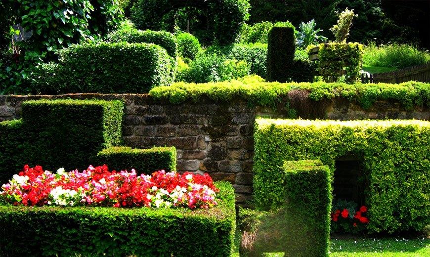 Вечнозеленые многолетники для сада