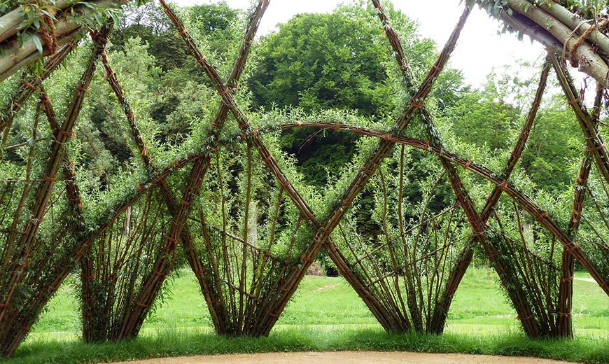 Живая изгородь необычной формы