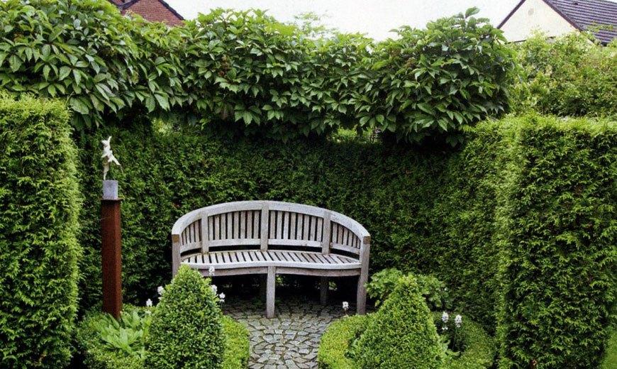 Живая изгородь в озеленении сада