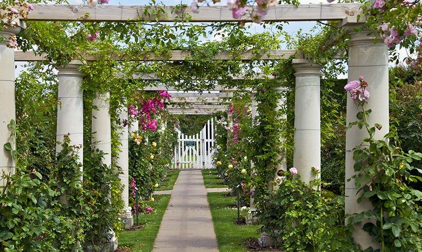 Вход в сад - перголы
