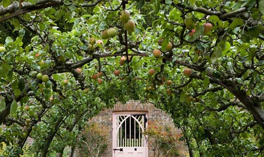 Шпалеры для плодового сада