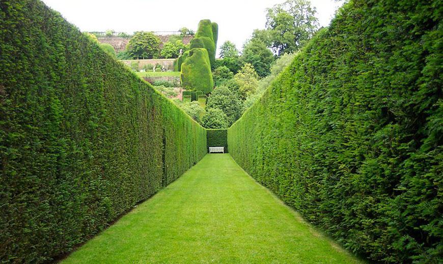 Живая изгородь - стены