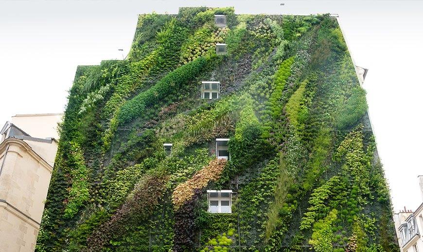 Вертикальный сад в городе