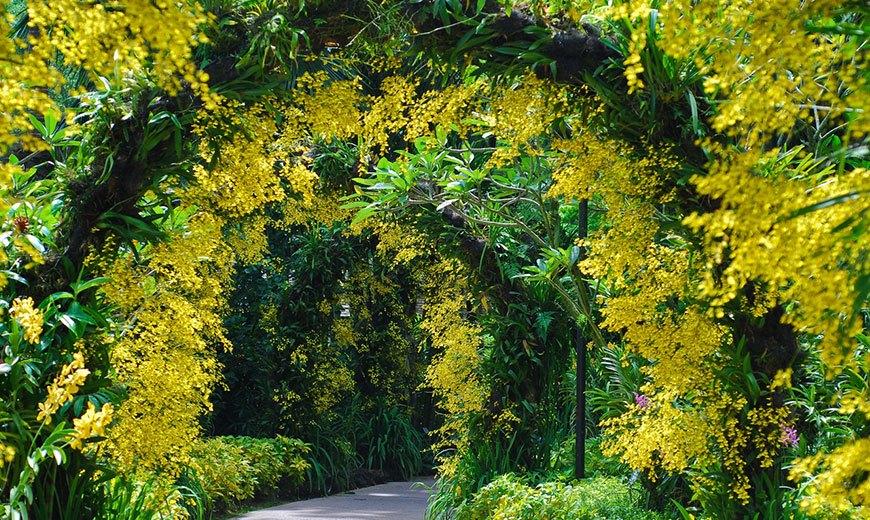 Вертикальный сад - мимоза