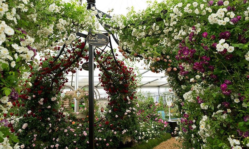 Обелиски для роз