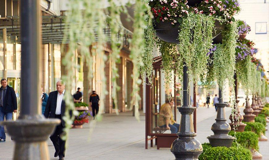 Вертикальное озеленение на улицах