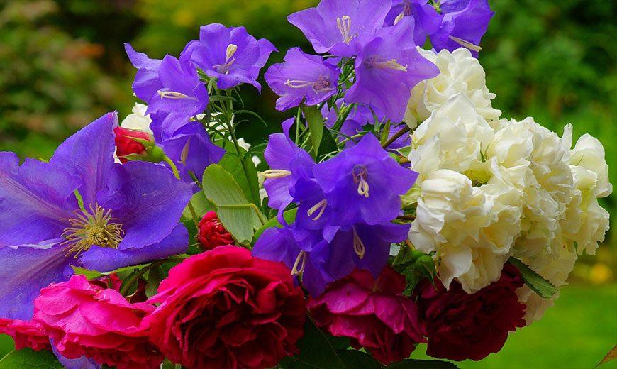 Клематис с розами