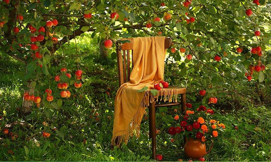Отдых под яблоней