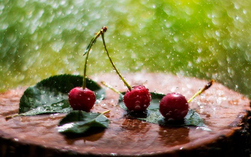 Черешня под дождем