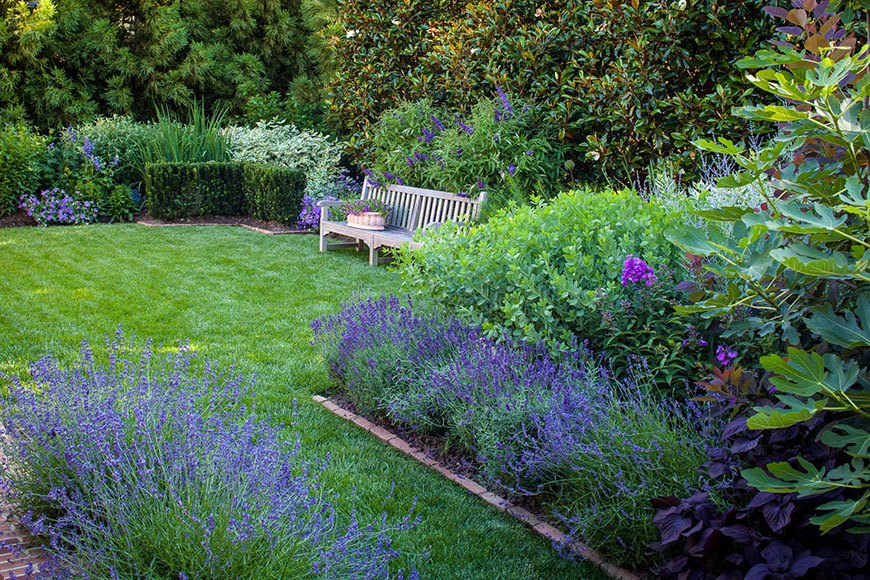монохромный сад с лавандой