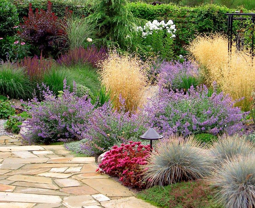 аптекарский сад с лавандой