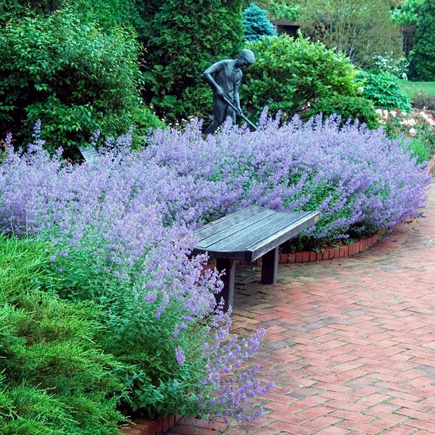 романтический сад с лавандой