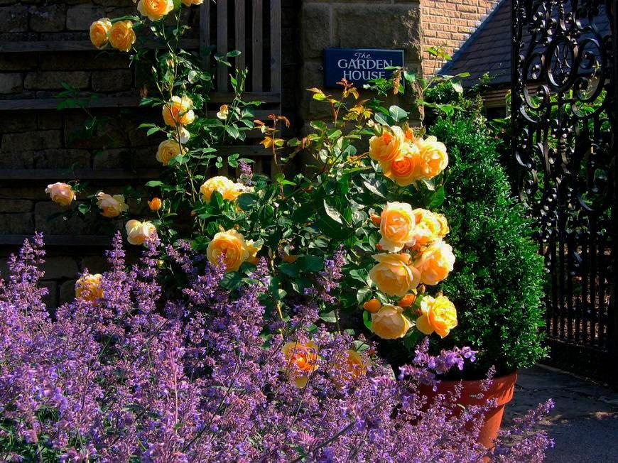 лаванда с желтой розой