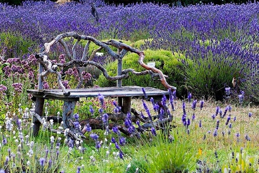 изящная скамейка рядом с лавандой