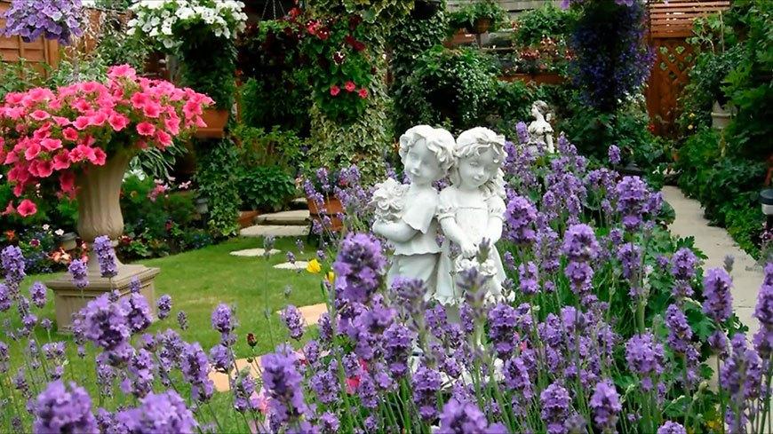 лаванда в романтическом саду